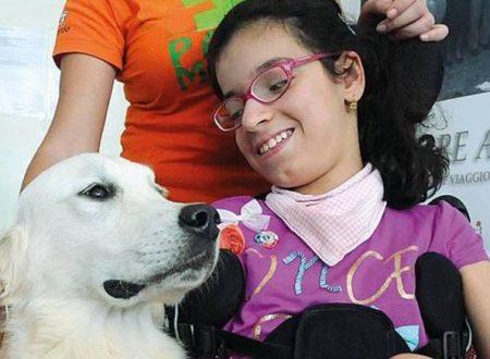Il cane che sa accendere luce e tv, cambia vita alla padroncina disabile.