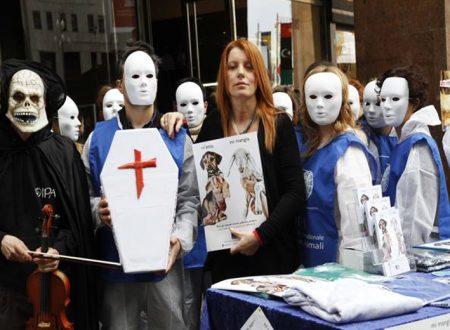 Macellazione Rituale: La Brambilla promette che farà cambiare al più presto la legge