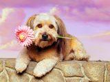 DOG-07-RK0094-05P
