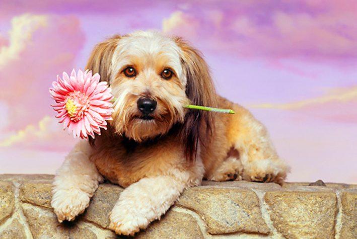 I cani ci amano, e ce lo garantiscono gli studi di un neuro-scienziato statunitense