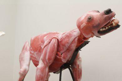 E' nata la cagnolina che salverà dalla vivisezione tanti amici a quattro zampe