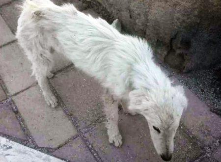 Abruzzo: muore di fame a soli pochi mesi di vita davanti agli occhi di tutti. Per lui nessuna compassione, e neanche un pezzo di pane